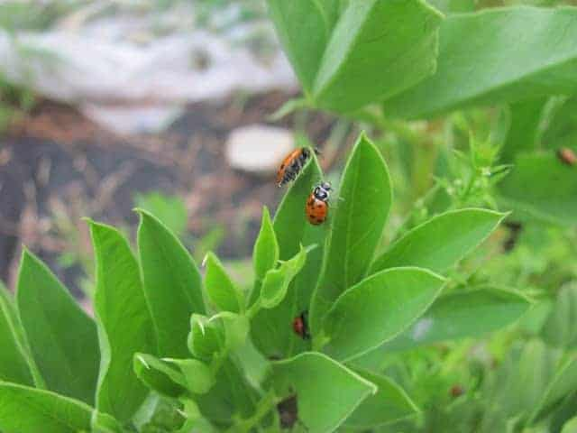 How to Prevent and Get Rid of Aphids