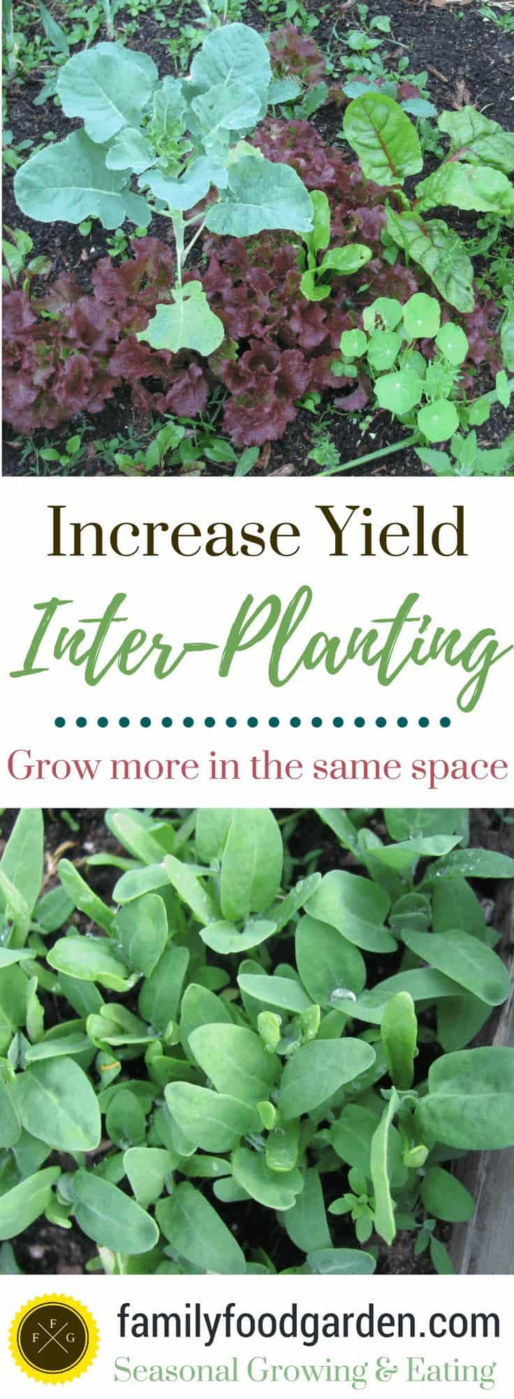 Inter-Planting for More Garden Yields