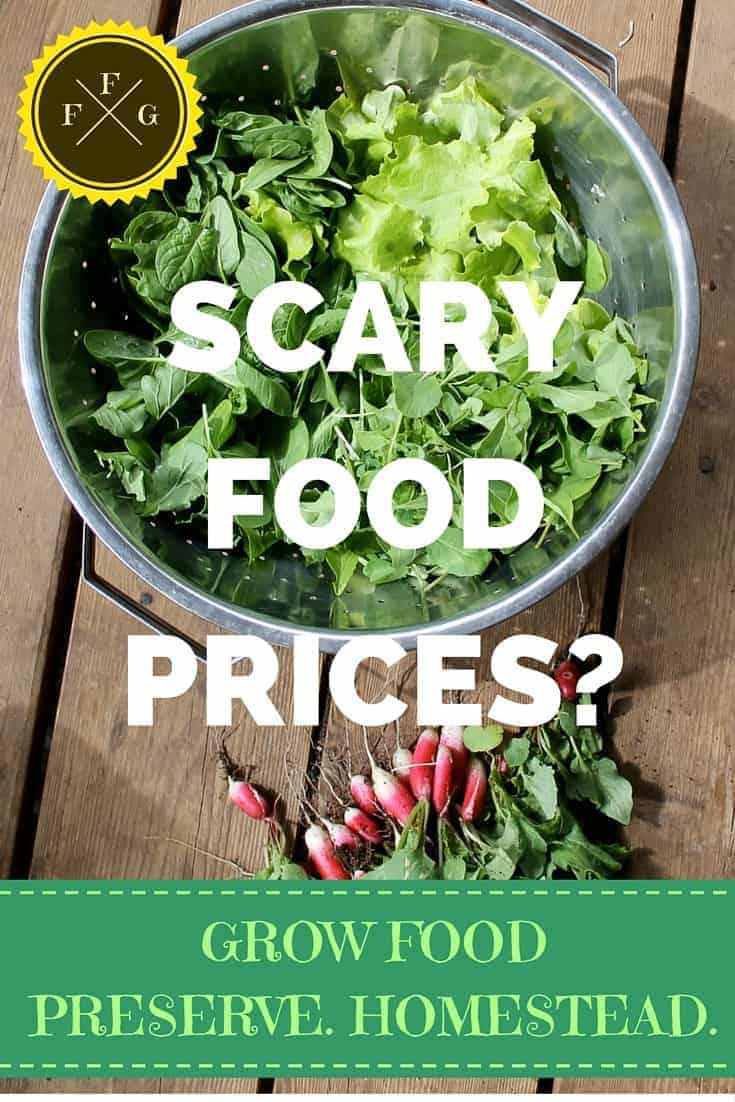 Worried about the rising cost of food? Here's what you can do