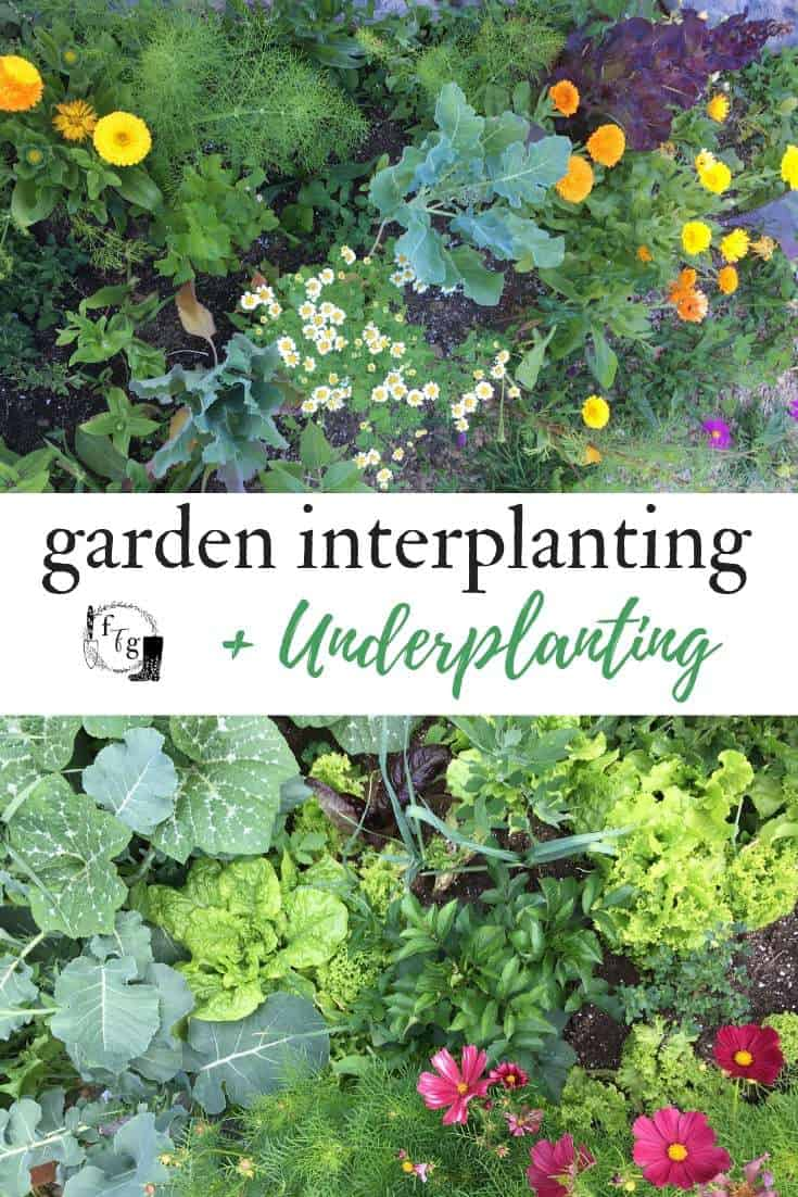 Interplanting and companion planting in the home garden