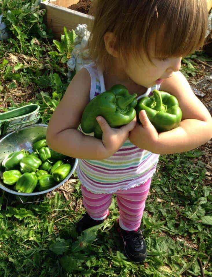 Best crops for kids to grow, harvest & eat