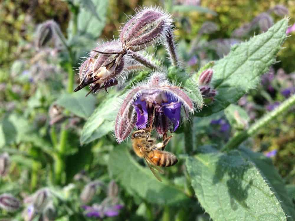 Increase biodiversity in your garden to help wild pollinators