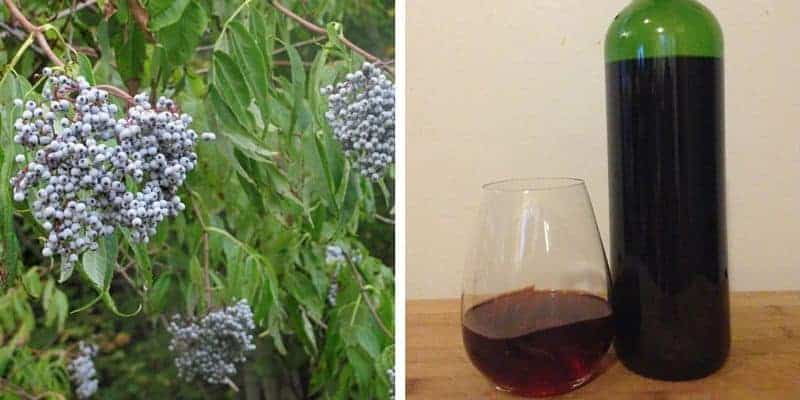 How to make elderberry wine using blue elderberries