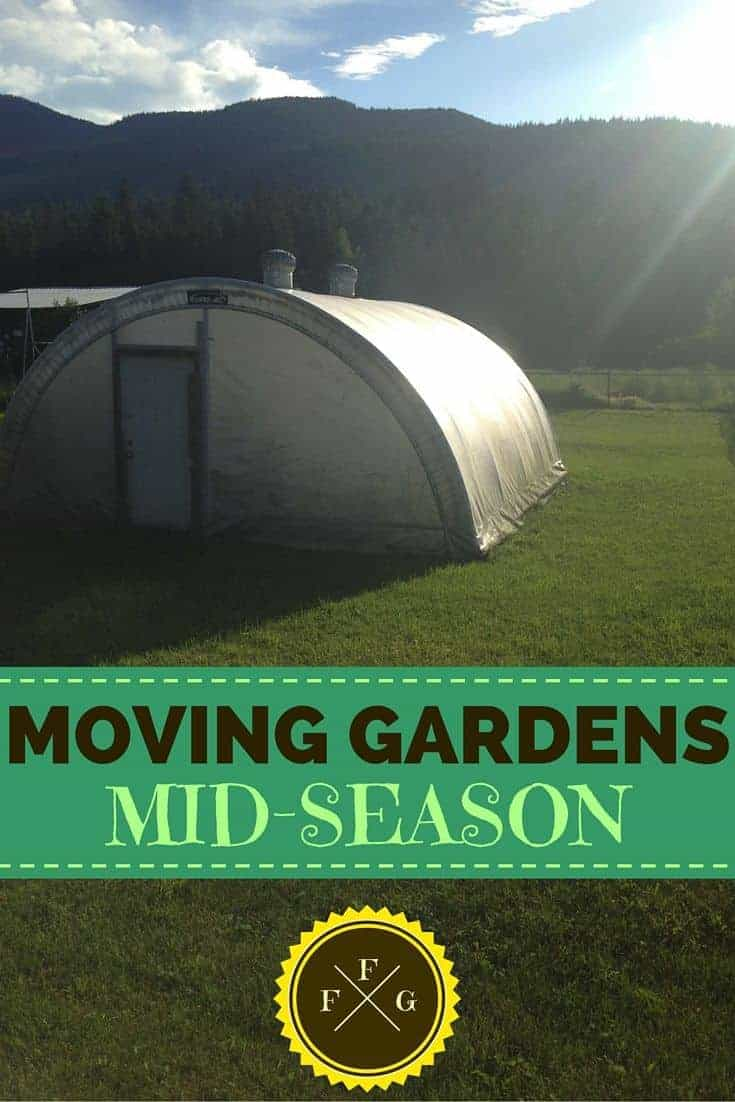 Moving mid-season is tough for a gardener!