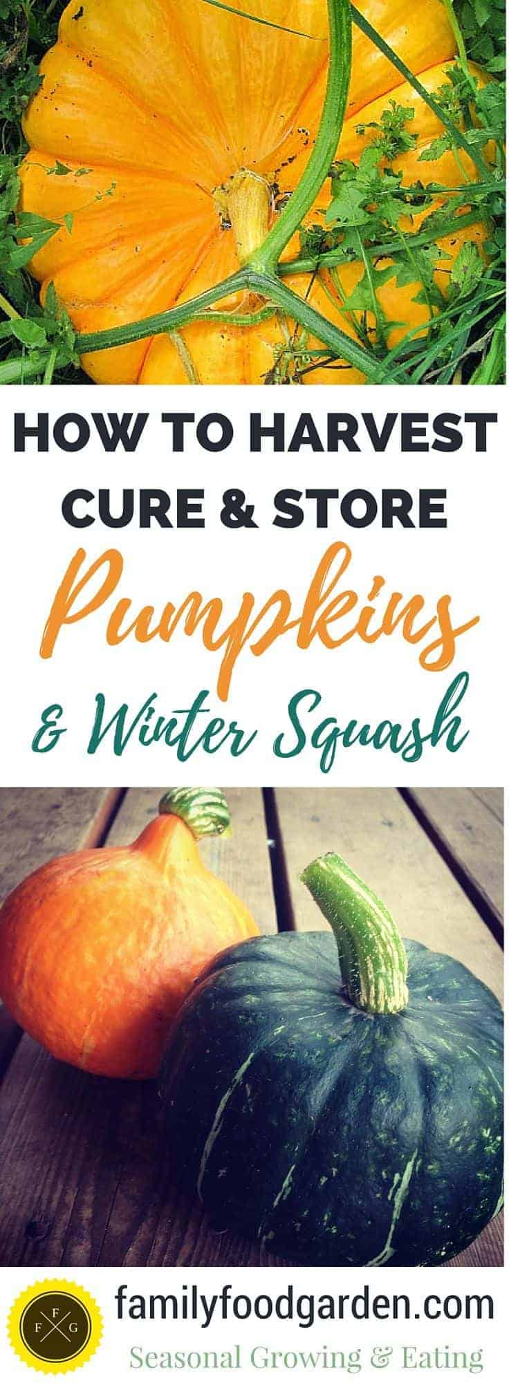 How to harvest, cure & store winter squash and pumpkins