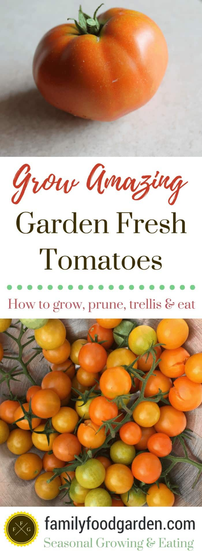 Growing Tomatoes ~ How to trellis, prune, grow & eat tomatoes!