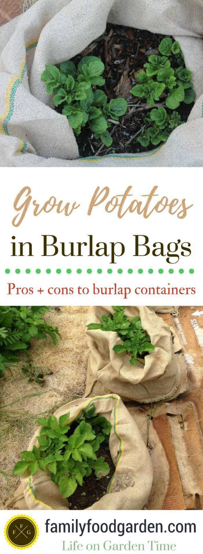 Pros and cons of using burlap sacks for container gardening