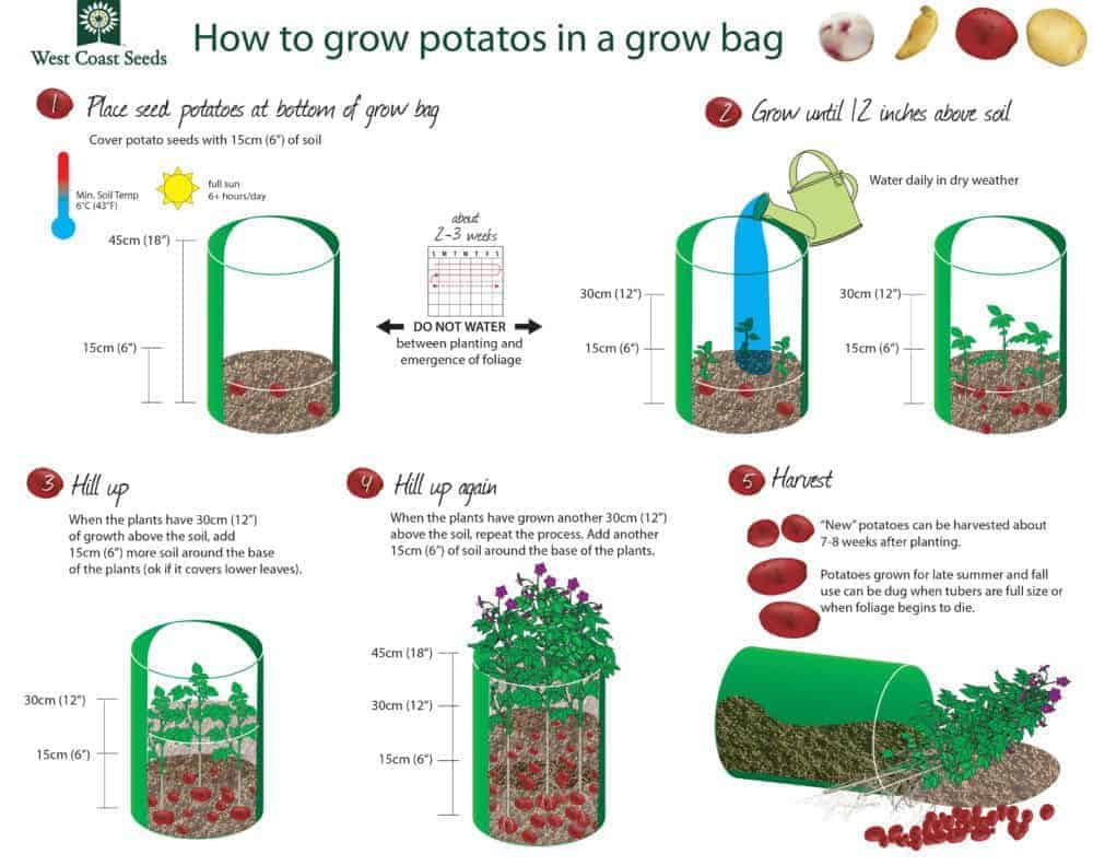 How to grow potatoes in a grow bag