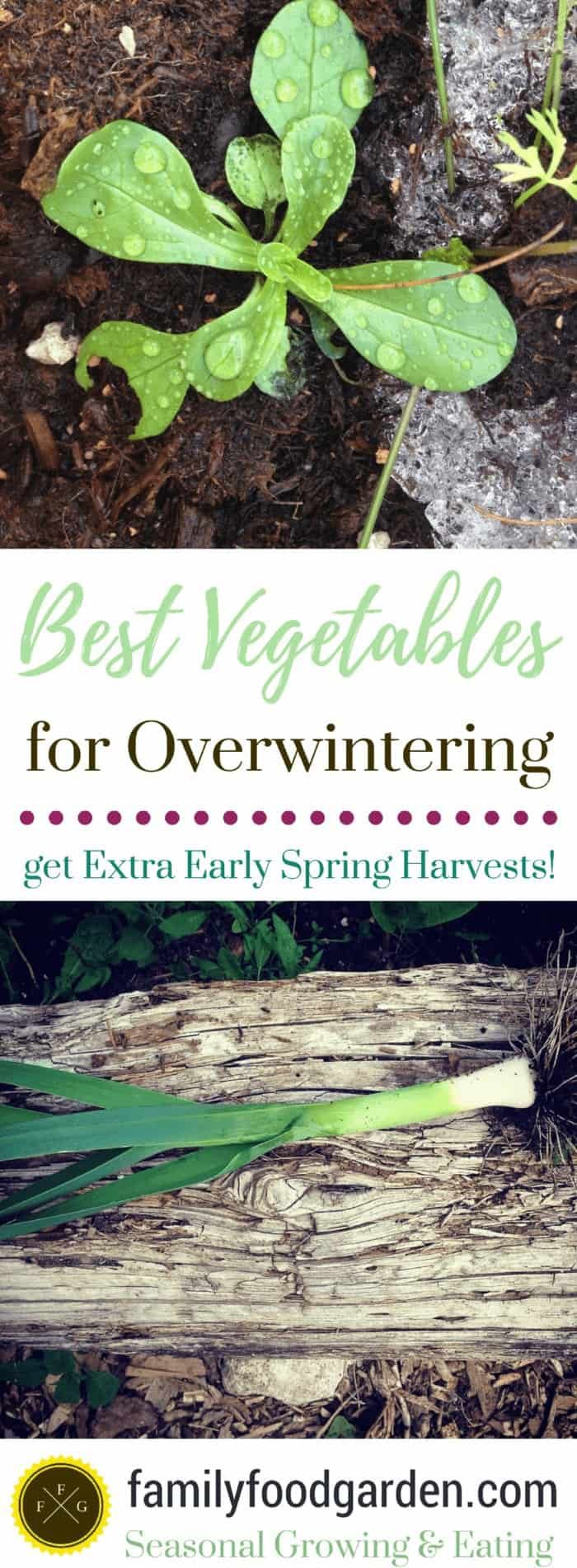 Vegetables for Overwintering