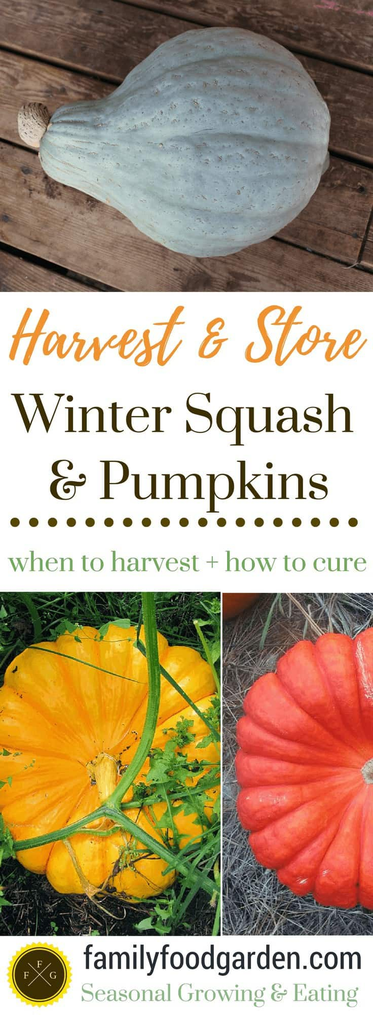 When to harvest, how to cure & store winter squash and pumpkins