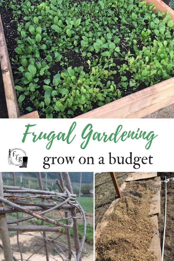 Tips for frugal gardening