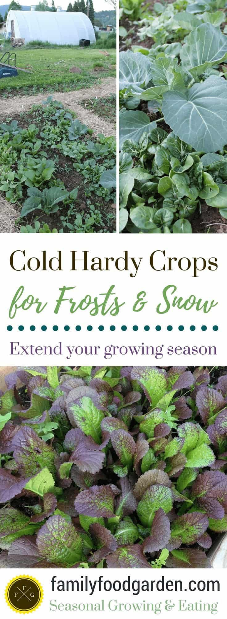 Cold Hardy Crops for Frosts and Snow