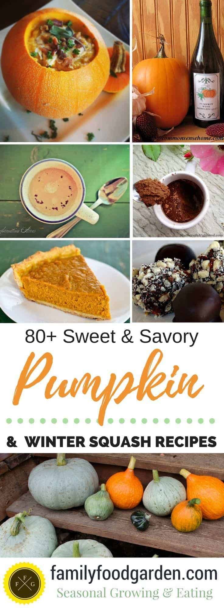 Sweet & Savoury Pumpkin and Winter Squash Recipes