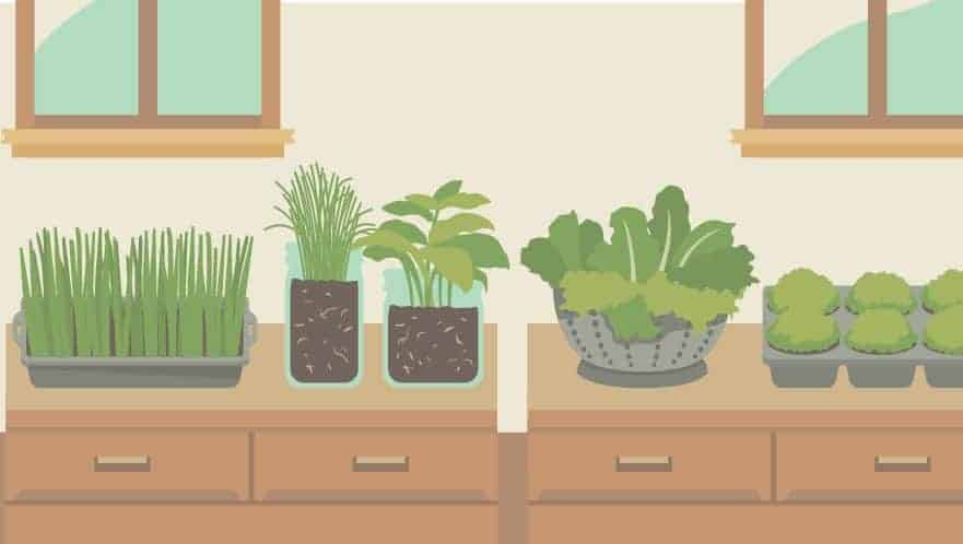 You Are Here: Home / Container Gardening / Indoor Gardening: Fantastic  Infographics