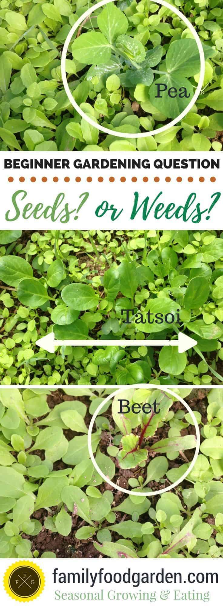 How to tell the difference with what are weeds and what are your crops
