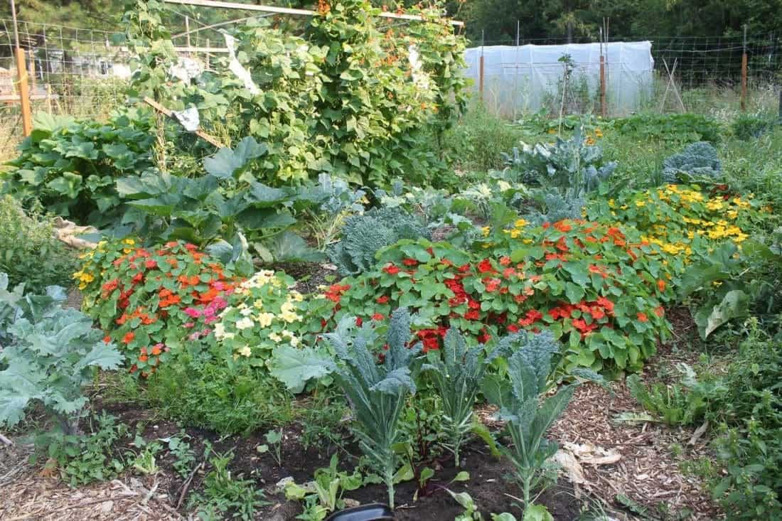 Companion Planting Flowers to Deter Garden Pests | Family Food Garden