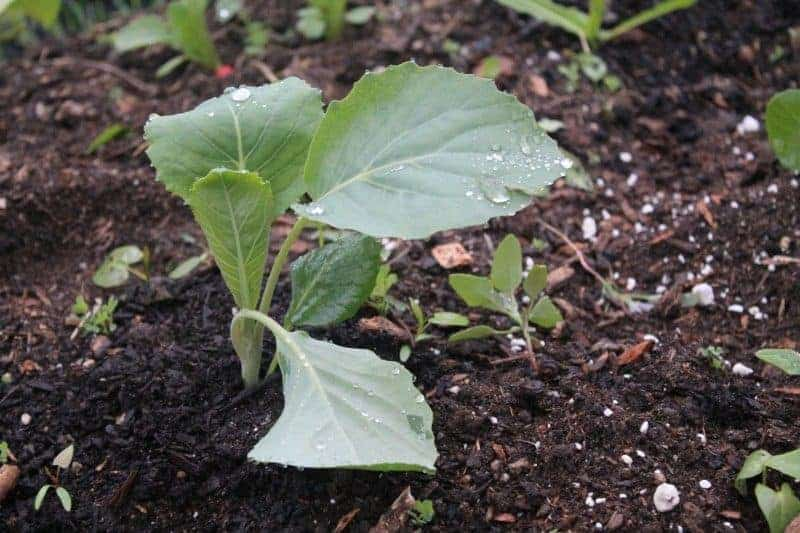 Growing your own transplants is the next gardening step