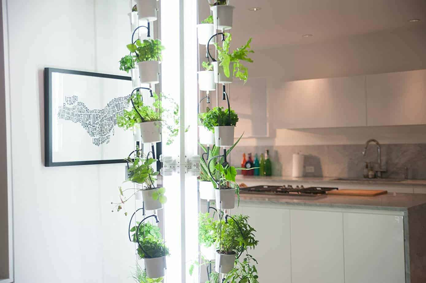 Indoor gardening great ideas to grow food inside family for Food garden ideas