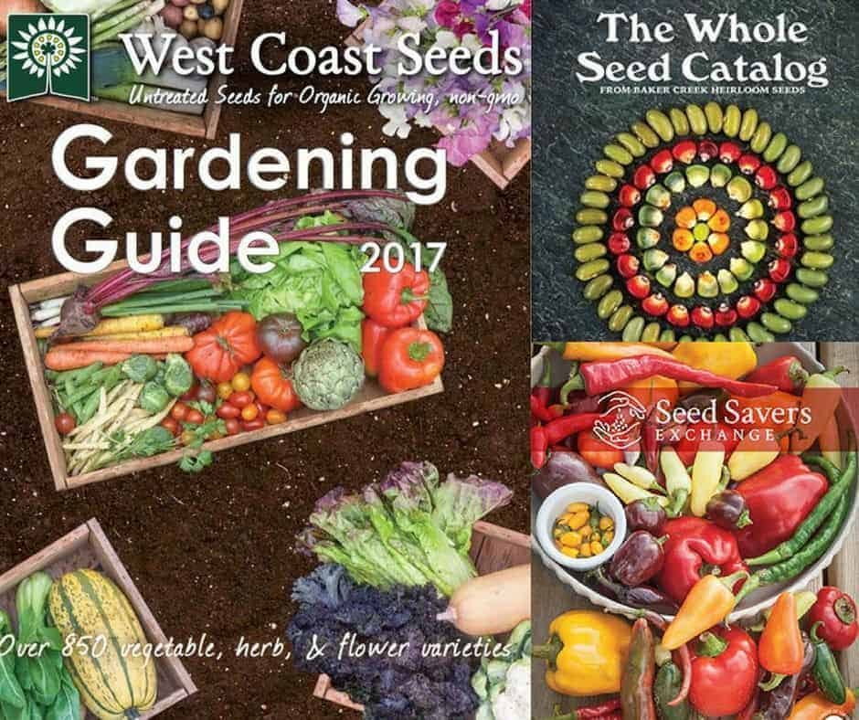 How to choose your vegetable seeds for the season