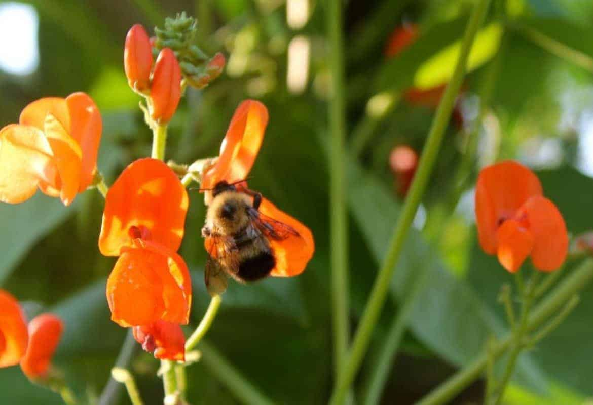 Garden flowers for the bees