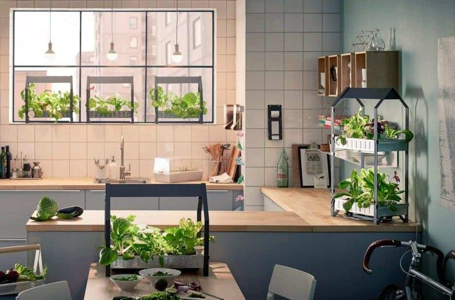 You Are Here: Home / Indoor Gardening / Indoor Gardening: Great Ideas To  Grow Food Inside