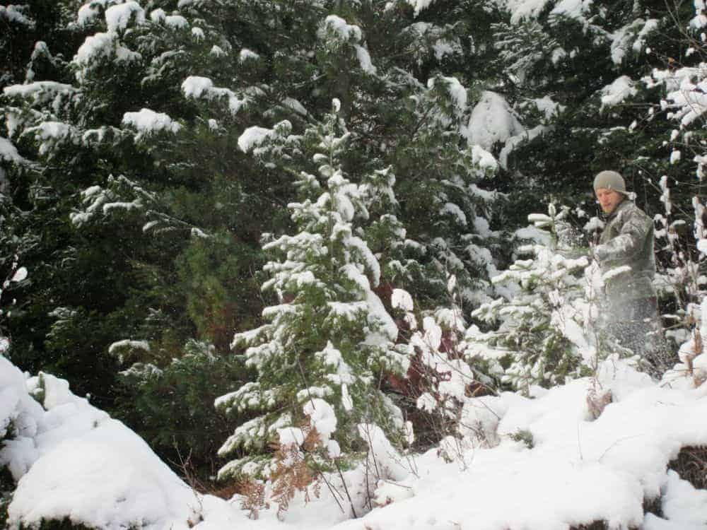 Finding your Christmas tree from the forest