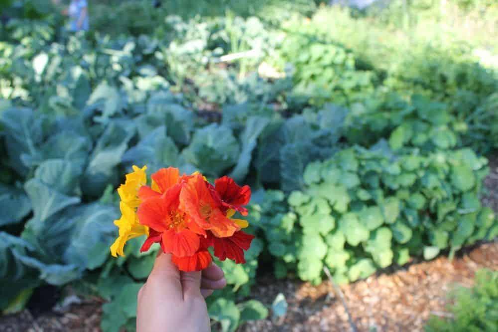 Best gardening articles of 2016