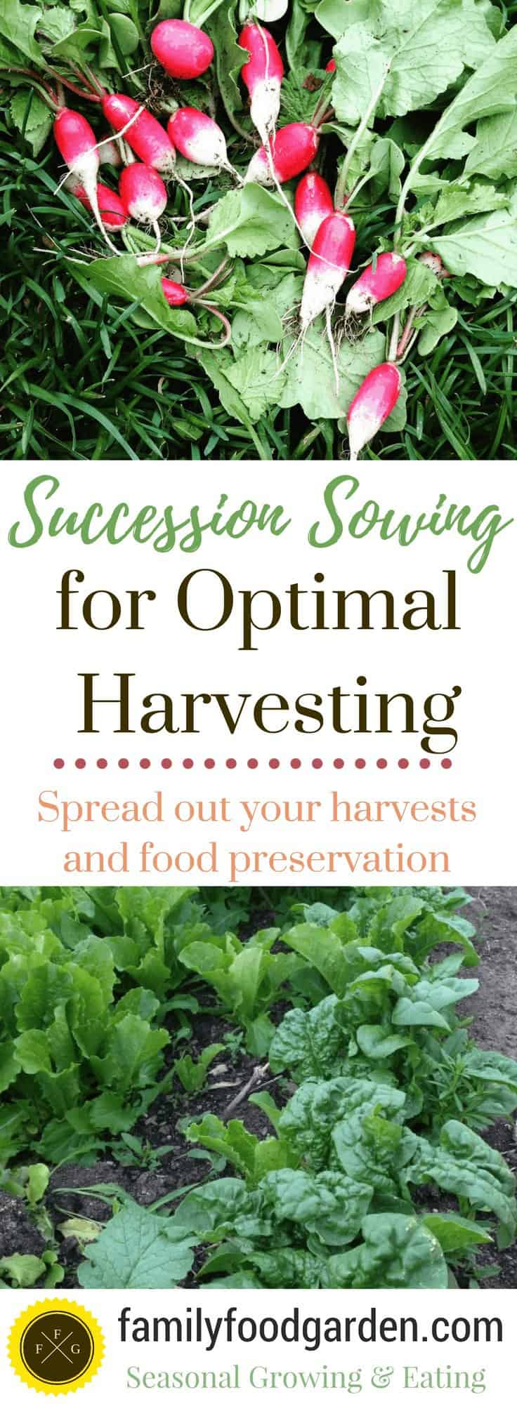 Succession planting helps to you grow better!