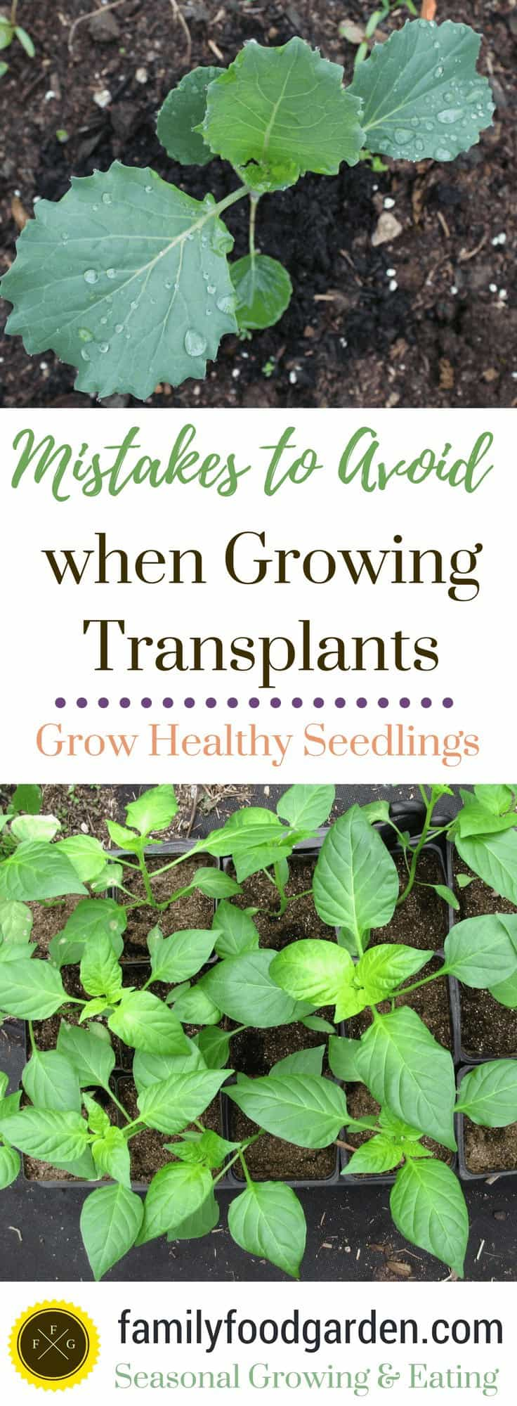 How to start your seeds & grow transplants