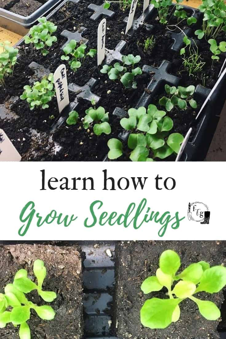 How to grow your own seedlings indoors