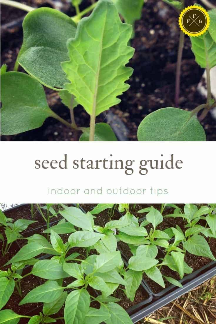 Seed starting guide