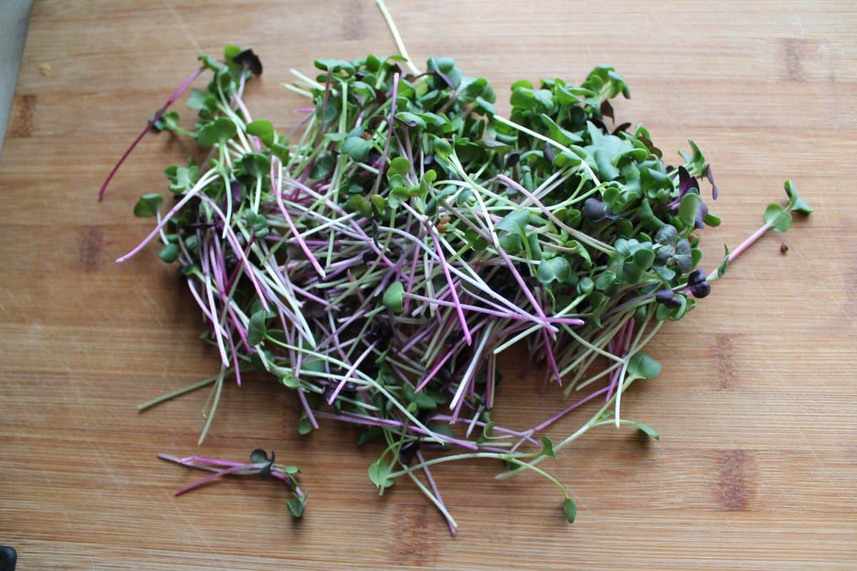 Radish microgreens are super colorful and add a nice kick to your food
