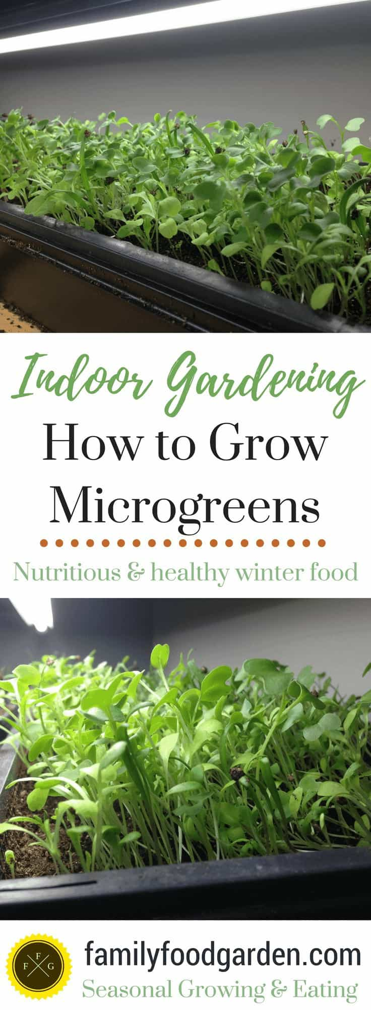 Growing Indoor Microgreens: Indoor Garden Superfood