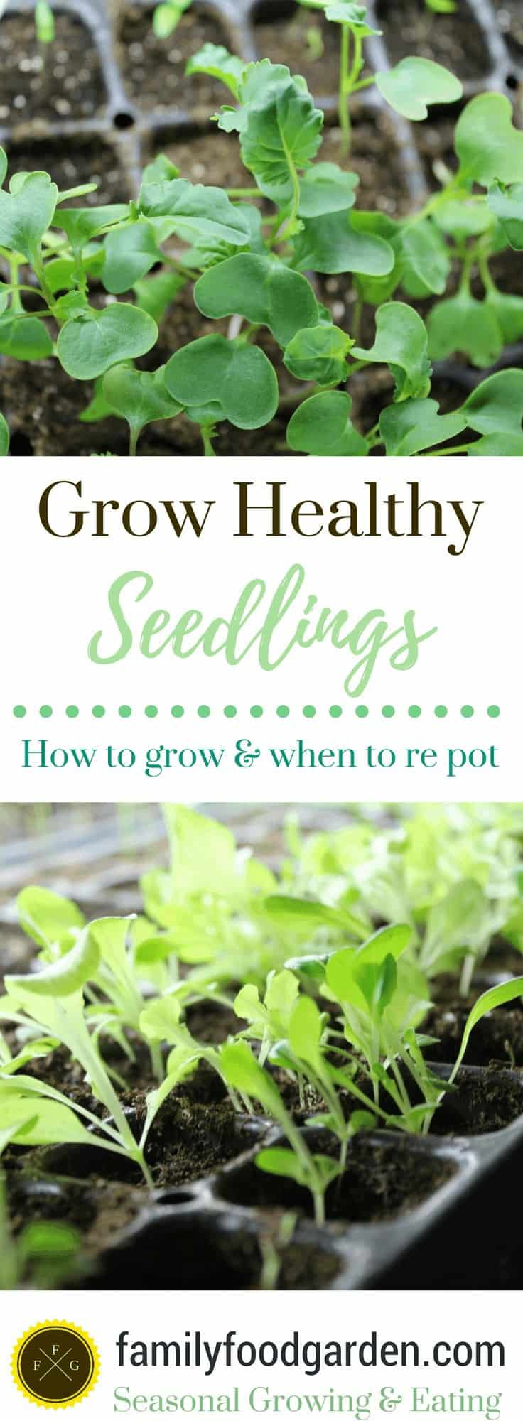 Grow healthy seedlings