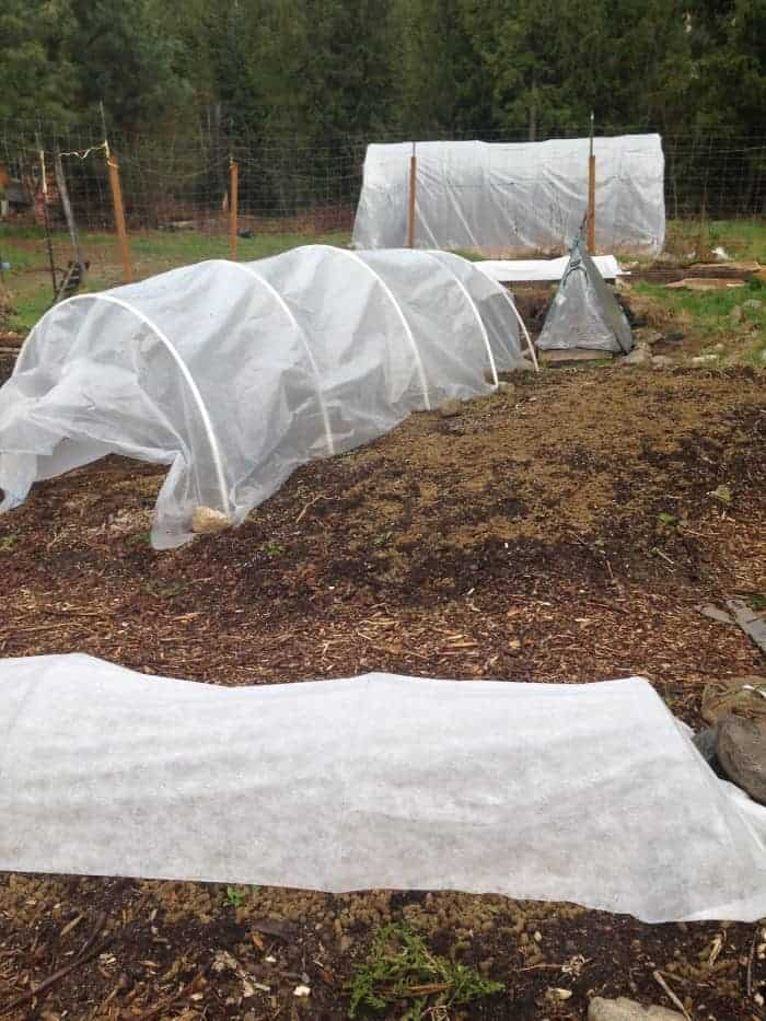 Hoophouse sizes for your garden: mini greenhouse, low tunnel and polytunnel