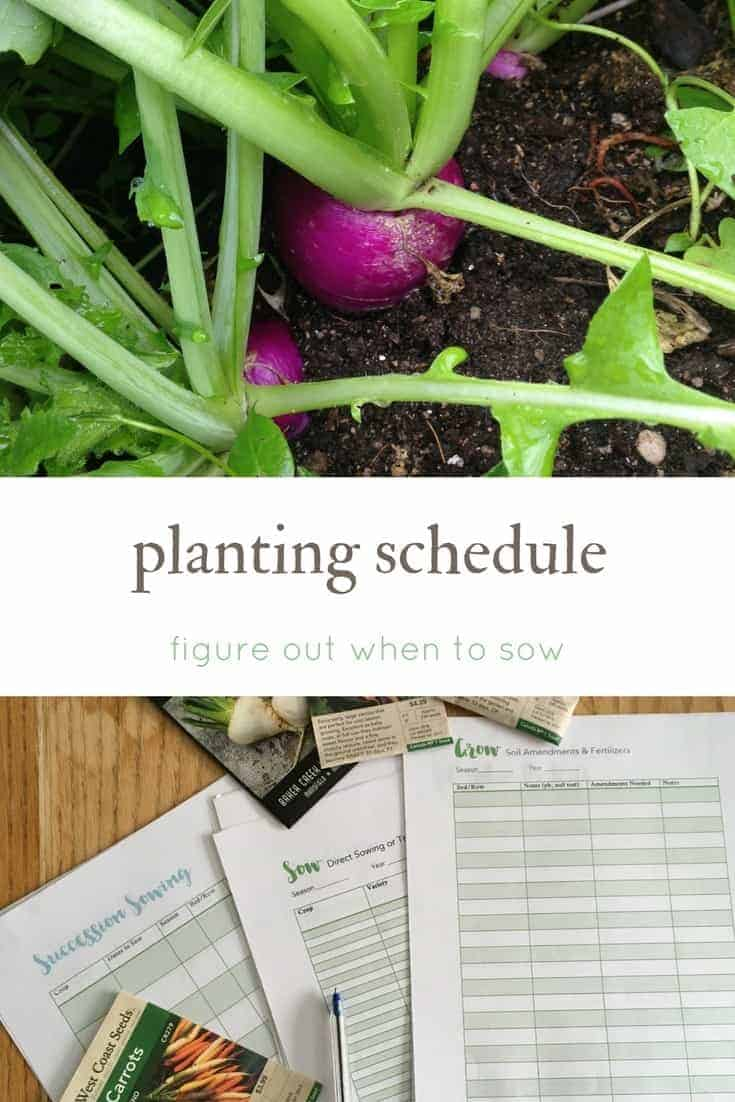 Create a planting schedule for your gardening season