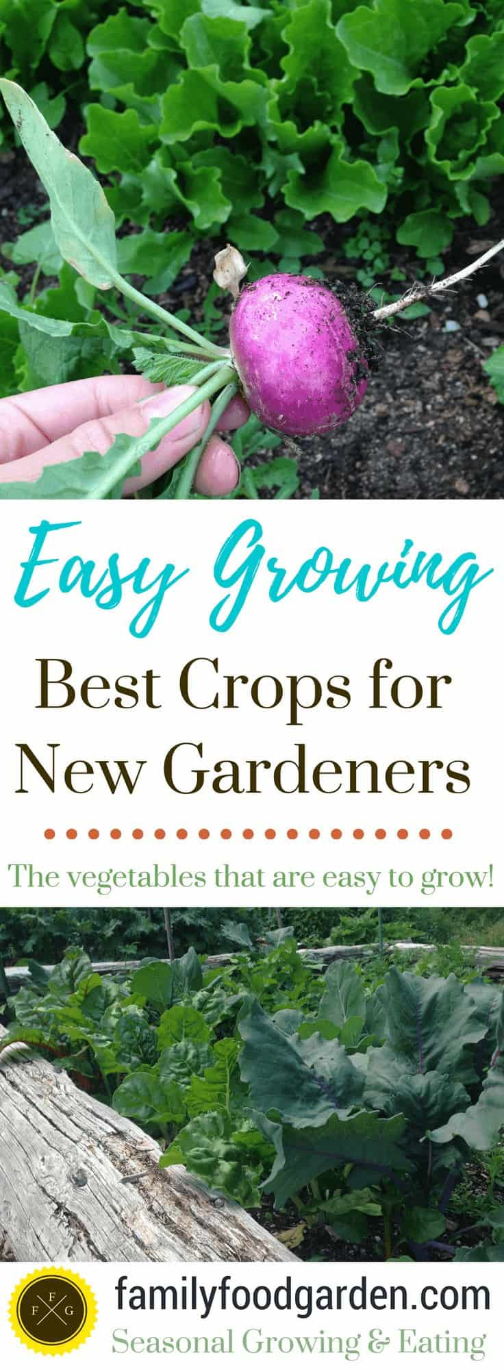 Easy vegetables to grow in the garden