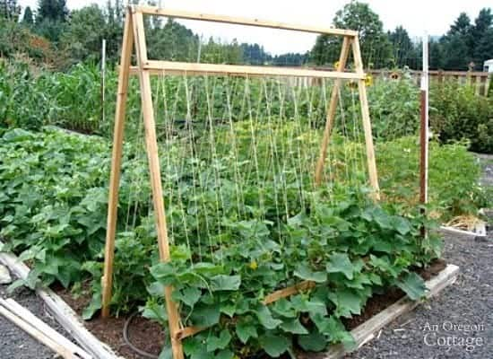 how to make a trellis for weed