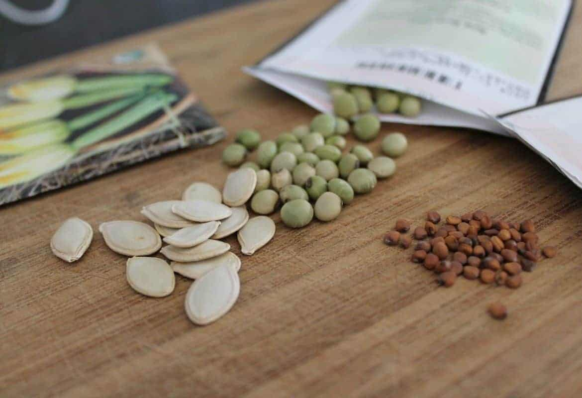 Should You Use Old Seeds?