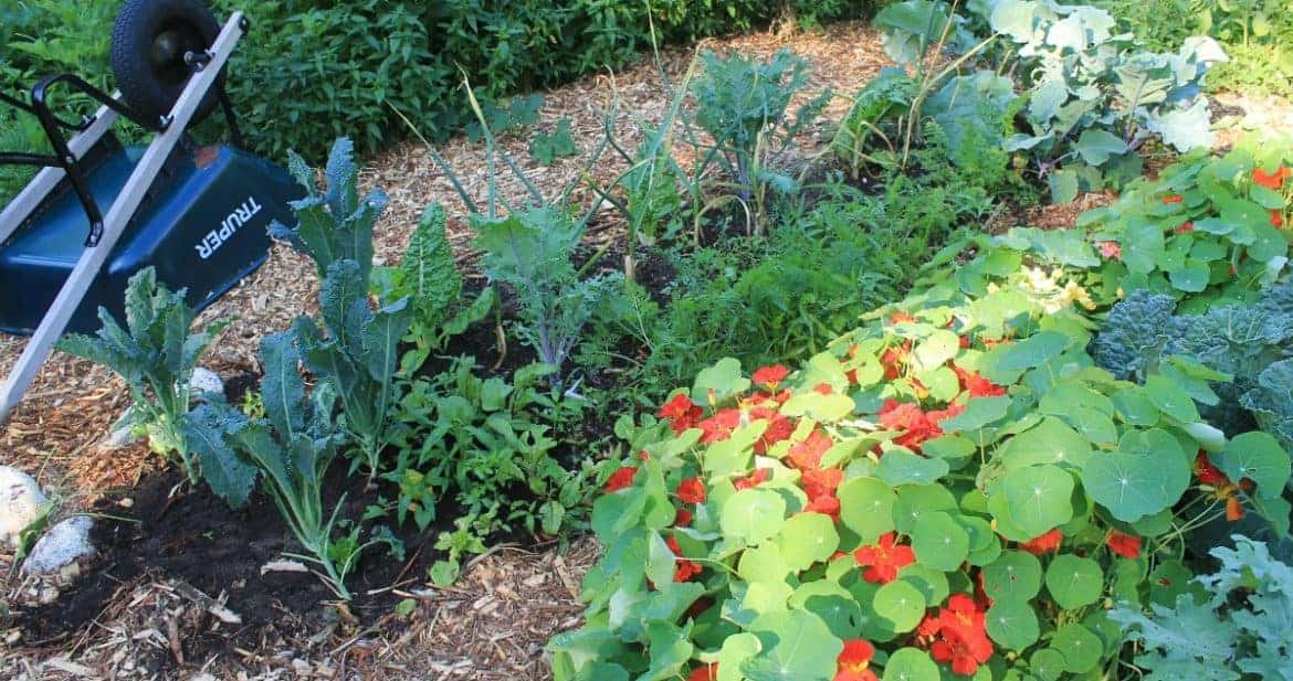 Wood chip garden mulch