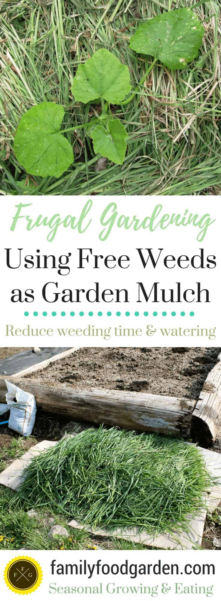 Using weeds as free garden mulch