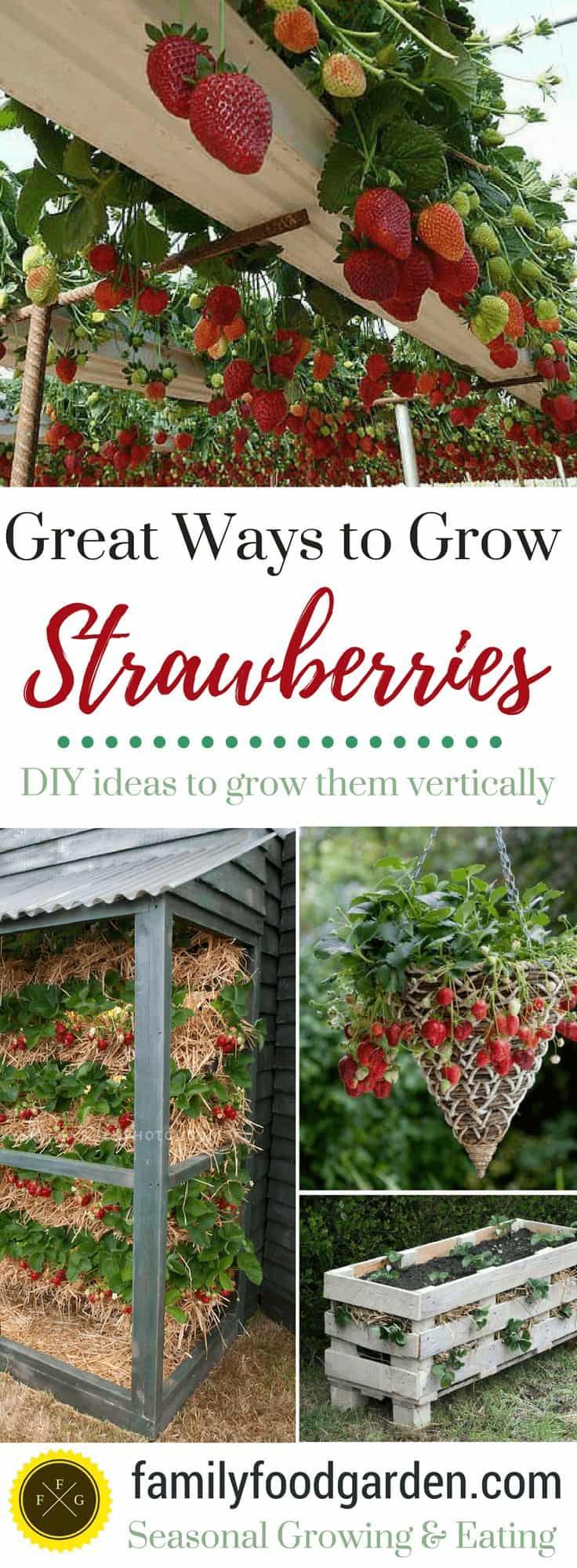 Grow strawberries in pots and containers