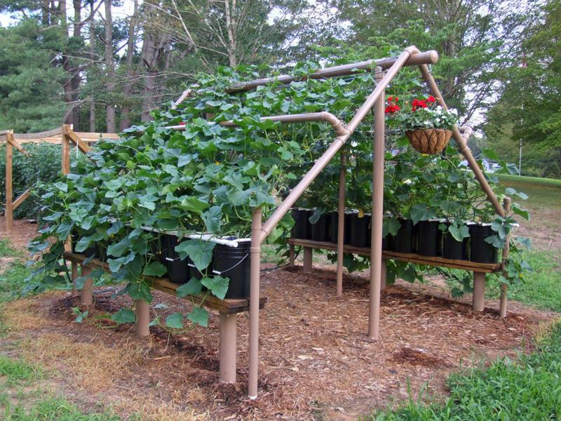 Amazing vertical gardening ideas family food garden for Food garden ideas