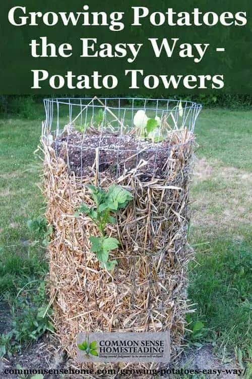 Grow Potatoes In Containers  Save Space  U0026 Increase Yield