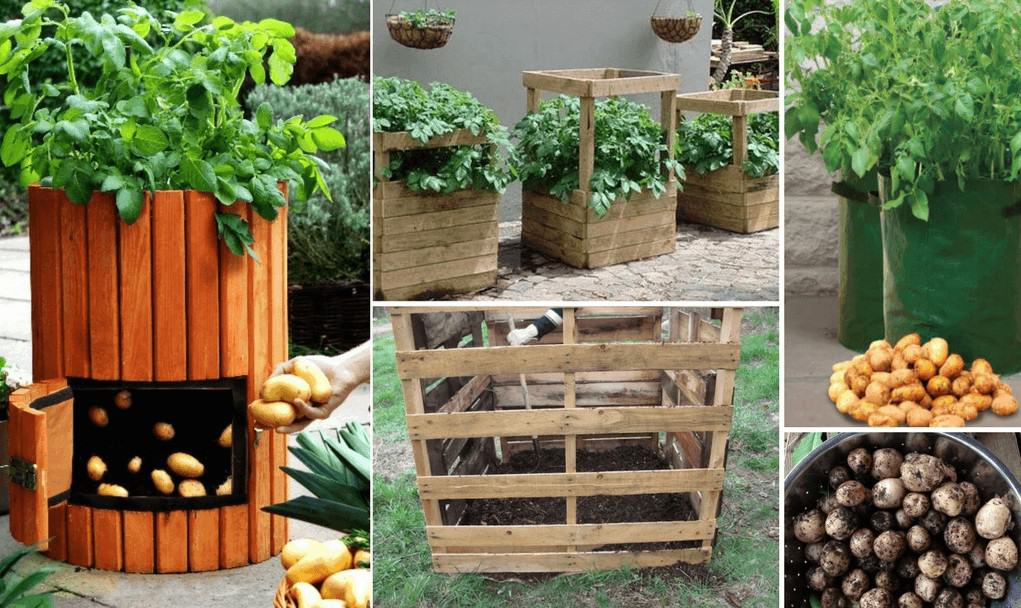 Grow Potatoes In Containers Grow Bags Or Towers Family Food Garden