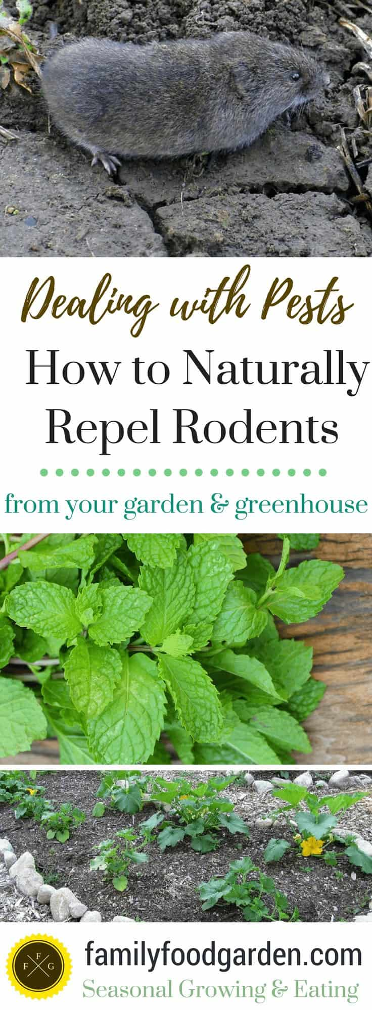 Natural Ways to Repel Rodents from your Garden