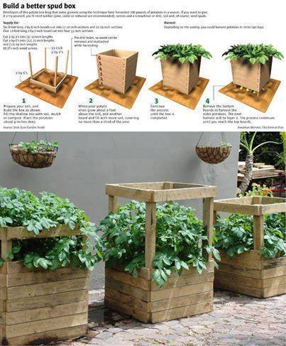 how to grow potatoes in a small space