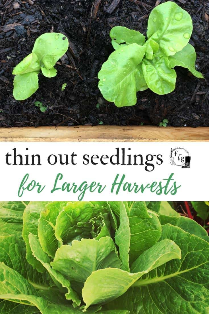 How to thin your plants for larger harvests