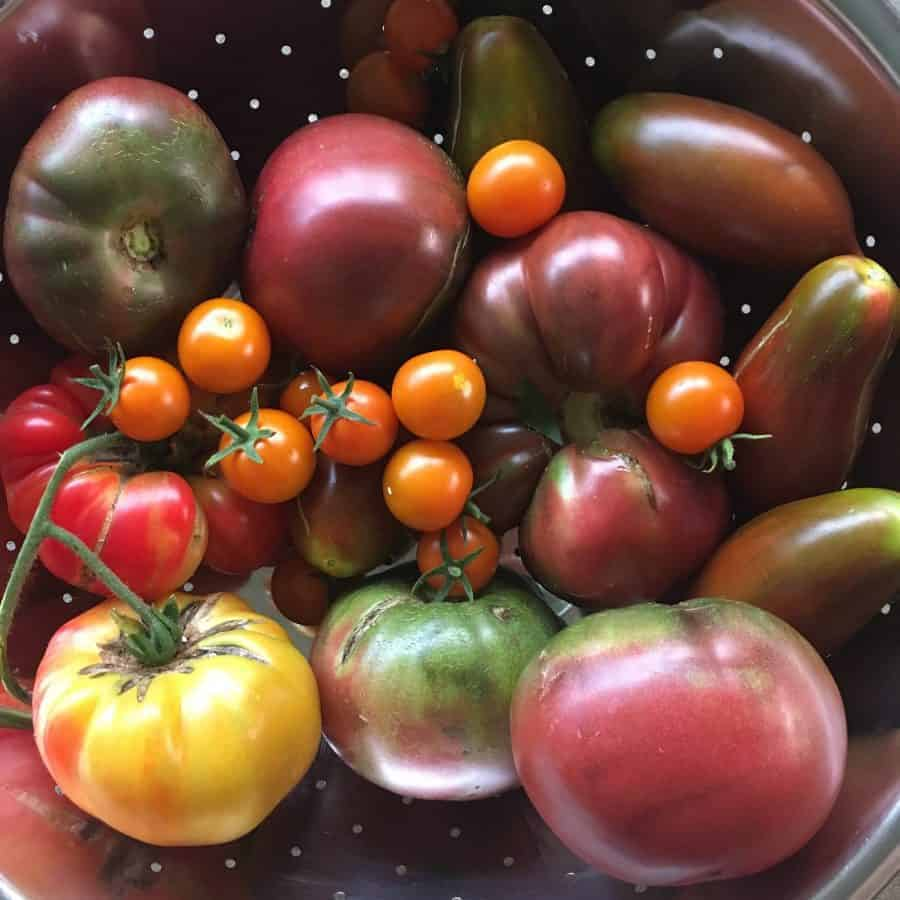 Recipe for canning garden fresh tomato salsa