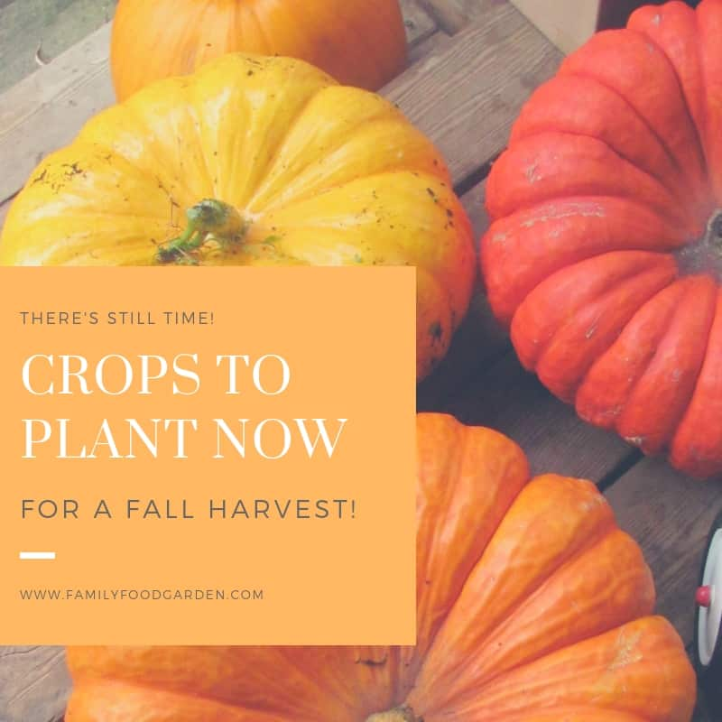 30 Summer Crops To Plant For A Fall Harvest Family Food Garden